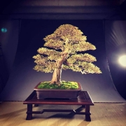 This is one of the two trees I brought for my customers to the Trophy show in Be...