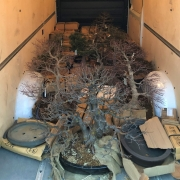 Now arrived at the Brose Bonsai Garden. Specially selected Bonsai and Pots from ...